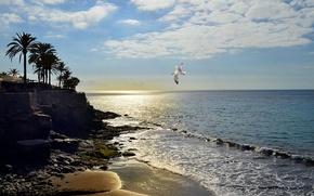 mar, costa, p?r do sol, gaivota, Playa Escondida, paisagem