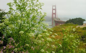 Il Golden Gate Bridge, Fort Scott, Stato della California