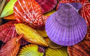 ракушки, разноцветные, крашеные