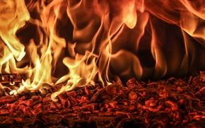 BONFIRE, coals, flame, fire