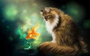 кошка, рыбка, art