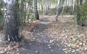 autumn time, footpath, foliage