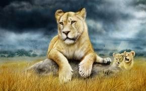leonessa, Cubs, arte