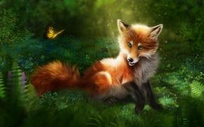 狐狸, 蝴蝶, 艺术