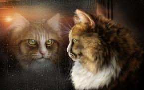 Kote, riflessione, finestra, vetro, gocce, arte