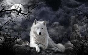 notte, luna, lupo, arte