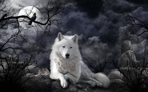 nuit, lune, loup, art