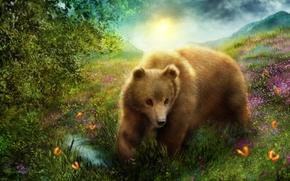 медведь, бабочки, природа