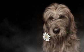 Wilczarz irlandzki, sztuka, pies