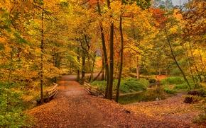 осень, дорога, лес, деревья, речка, мост, пейзаж