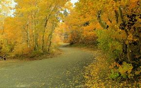 ?rvores, pequeno rio, floresta, paisagem, outono