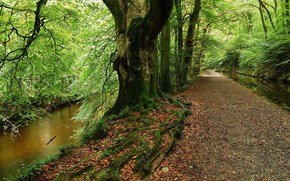 лес, дорога, деревья, речка, пейзаж