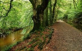 ?rvores, pequeno rio, estrada, paisagem, floresta