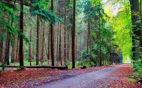 ?rvores, paisagem, estrada, floresta