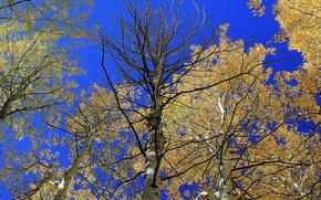небо, кроны, деревья, природа, осень