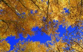 autunno, alberi, cielo, incoronare, natura