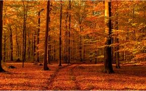 ?rvores, estrada, floresta, paisagem, outono