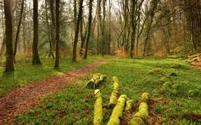 passeio, paisagem, ?rvores, floresta