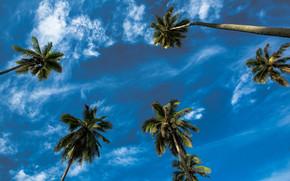 Nuvens, coroa, Palms, paisagem, c?u
