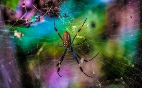 ragno, web, Macro