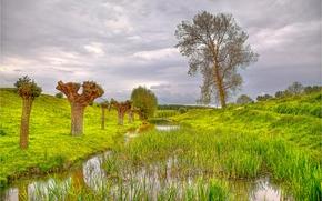 Idilio rural, Países Bajos, Hills, árboles, estanque, paisaje