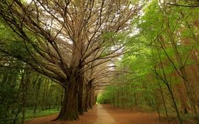 estrada, paisagem, ?rvores, parque