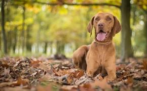cane, fogliame, autunno, bokeh