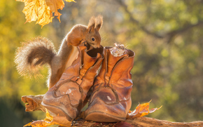 squirrel, mouse, mouse, boots, foliage, autumn