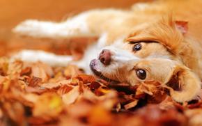 ver, humor, Focinho, folhagem, c?o, outono