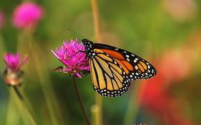 фотокартина, печать на холсте на заказ Украина ArtHolst цветок, бабочка, макро