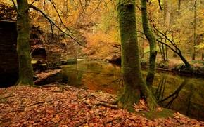 floresta, ?rvores, rio, ponte, outono, paisagem