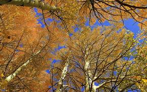 кроны, небо, деревья, природа, осень