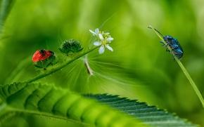 фотокартина, печать на холсте на заказ Украина ArtHolst лист, цветы, жуки, макро