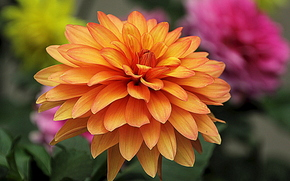 фотокартина, печать на холсте на заказ Украина ArtHolst георгин, цветок, флора