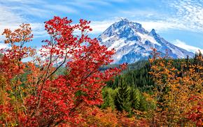 ?rvores, paisagem, outono, Montanhas