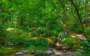 japanese garden, сад, парк, деревья, пейзаж