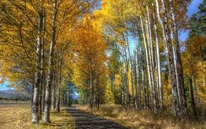 ?rvores, paisagem, estrada, outono