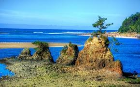 sea, Rocks, shore, trees, landscape