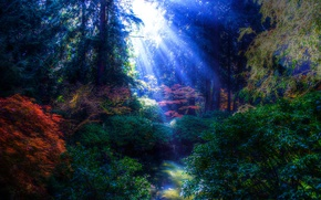 park, trees, pond, RAYS OF THE SUN, landscape