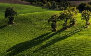 Marche, It?lia, Monti Sibillini National Park, Pevebovilyana, Pievebovigliana, Parque Nacional de Sibillini Mountains, campo, ?rvores