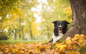 outono, folhagem, ?rvore, c?o