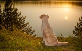 собака, вода, настроение