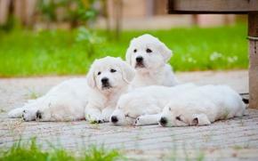 отдых, щенки, собаки