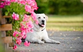 портрет, цветы, собака