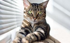 ver, gato, COTE