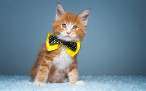 ginger kitten, kitten, butterfly