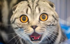 Focinho, enormes olhos, gato, medo, COTE, horror