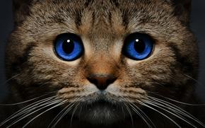 Focinho, olhos azuis, gato, ver, COTE, bigode