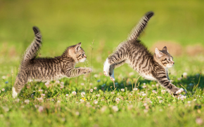 Kittens, twins, couple, tails, game, catch, lawn