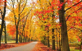 road, trees, park, landscape, autumn